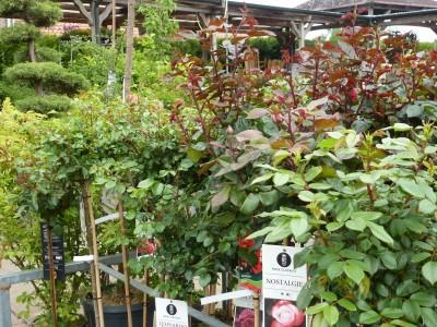 Gartencenter Hilgert | Baumschule und Stauden