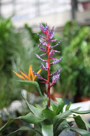 Gartencenter Hilgert | Zimmerpflanzen