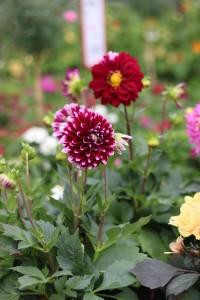 Gartencenter Hilgert | Beet- und Balkonpflanzen